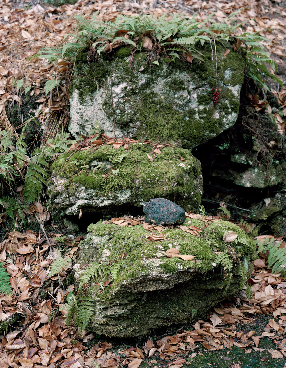 Moss Covered Stones, 2015