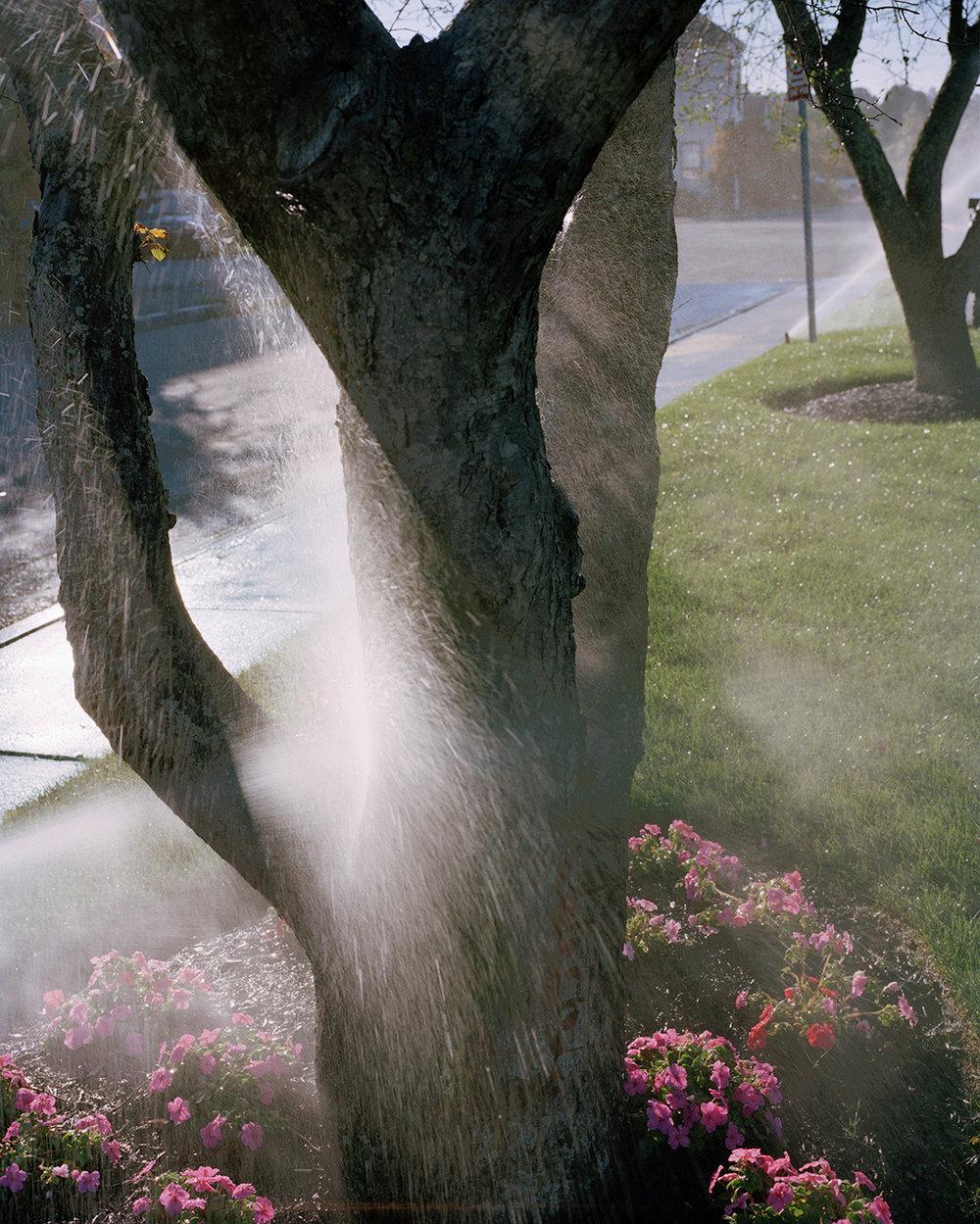 Sprayed Tree, 2016