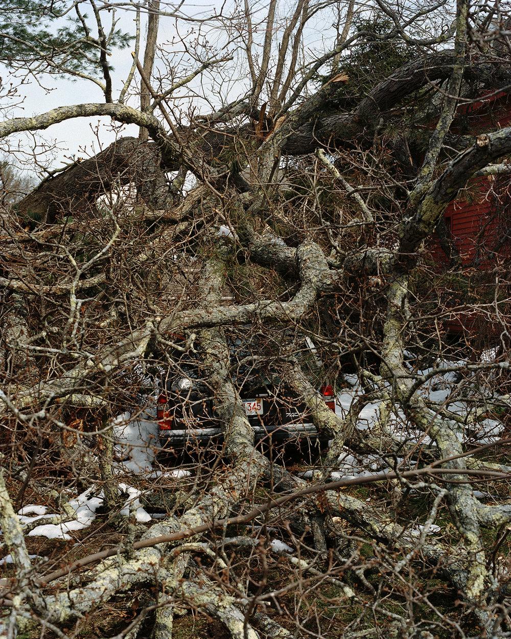 Broken Tree, 2018