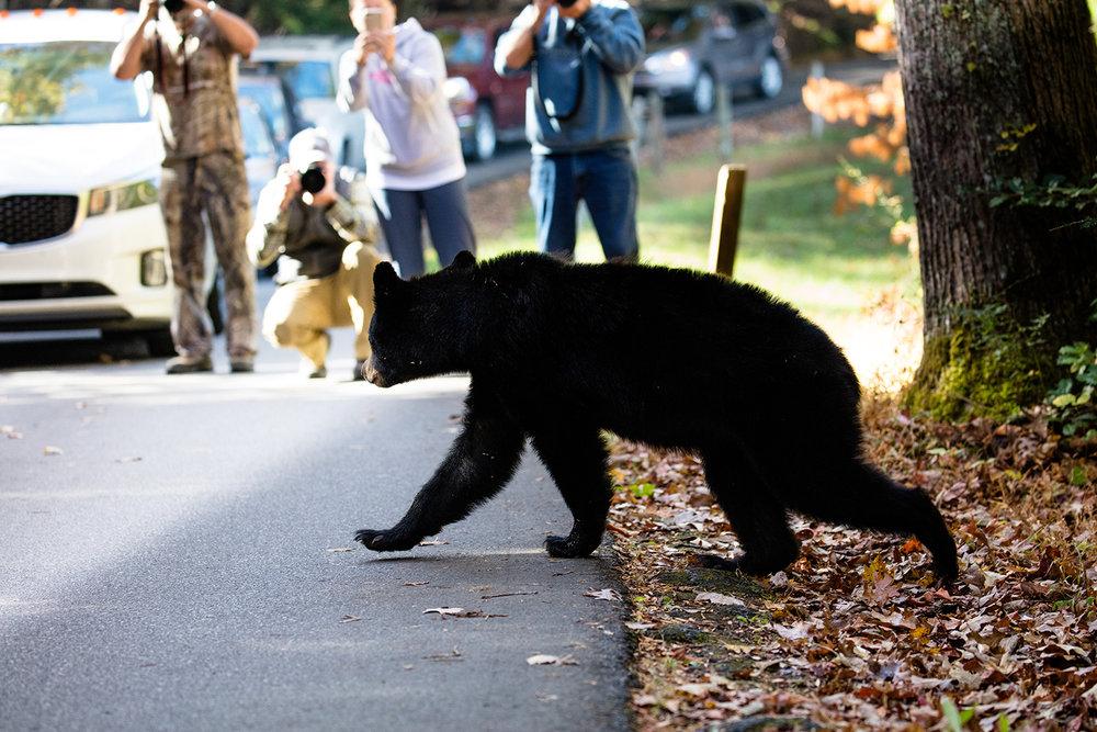 what would you call paparazzi for bears? Beararazzi?