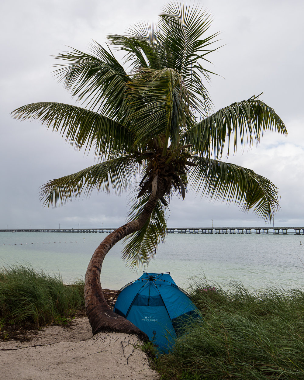 Ideal palm tree shelter
