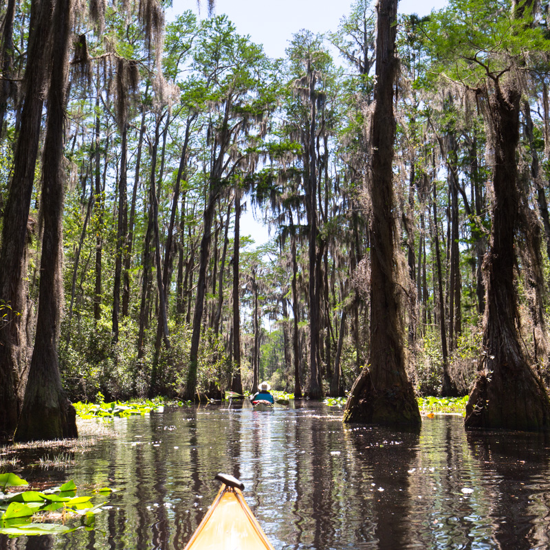 kayaking in the swamp is like walking in the woods