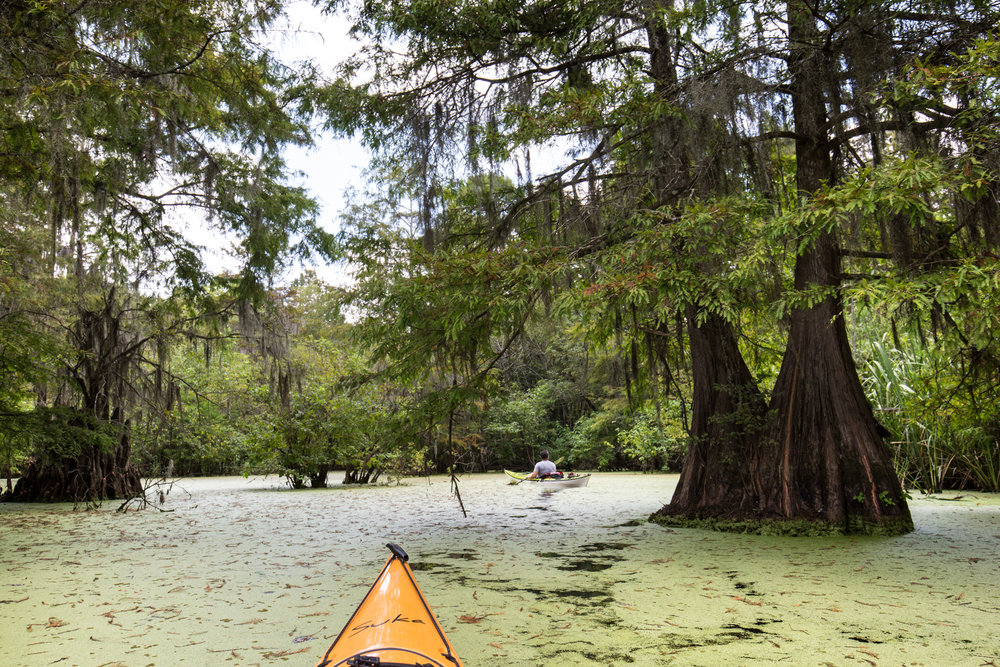 Kayaking in the cypress forests at Sparkleberry Swamp