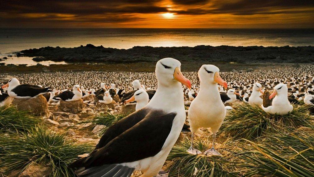 Seagulls See Gulls -