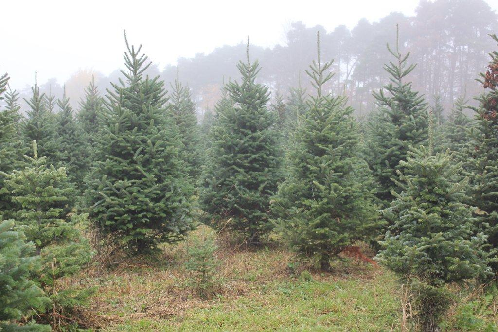 - Come Visit €� Page's Christmas Tree Farm
