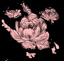 rose logo.png