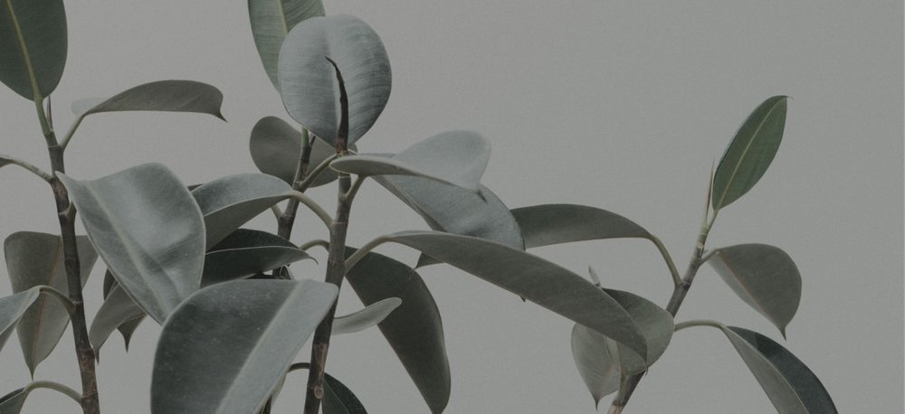 A thriving plant…just like content marketing grows a brand.
