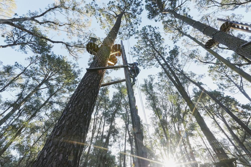 Forest_Adventures- 62.jpg