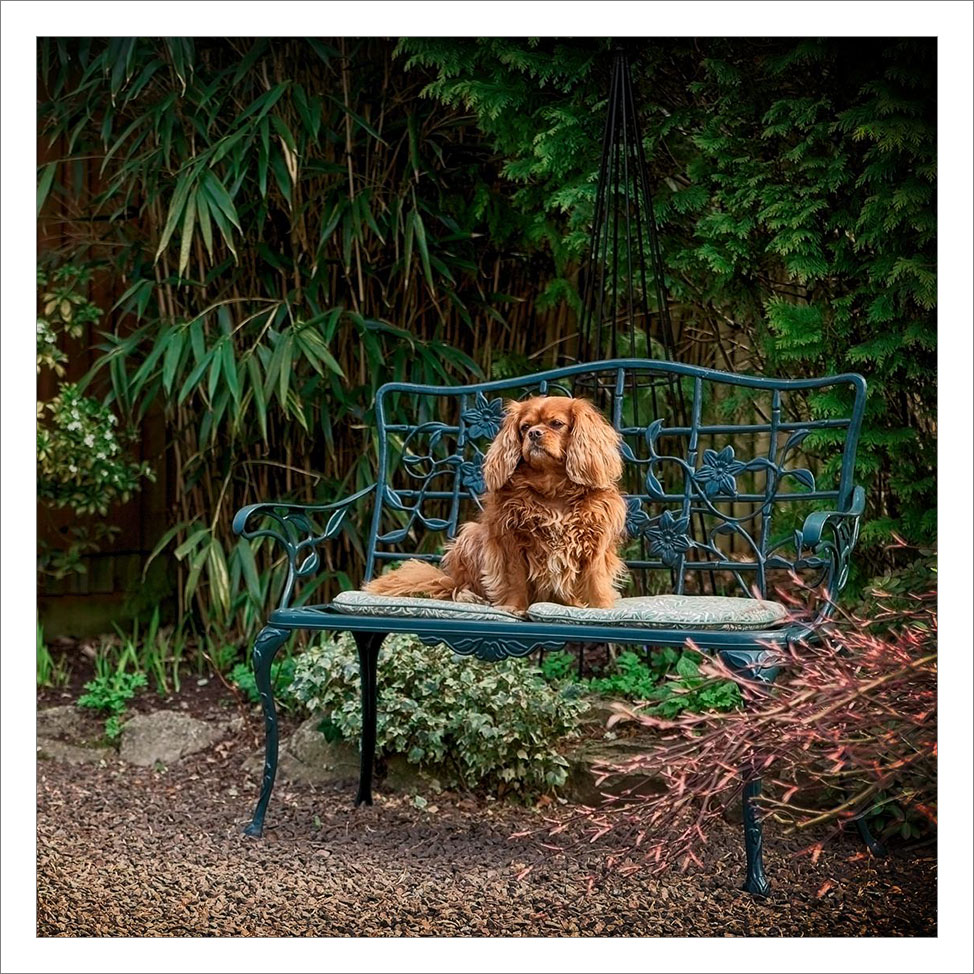 Pet Photoshoot at Home Horsham West Sussex.jpg
