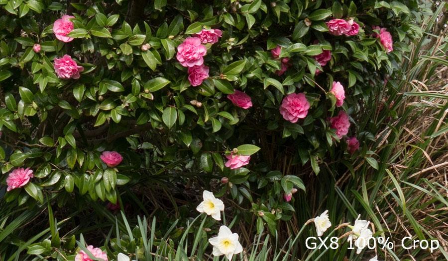 Foliage-Tests-170317-GX8-1001-Crop.jpg