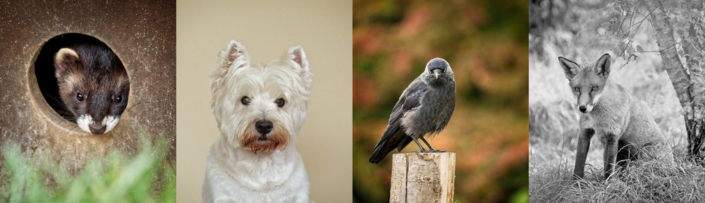 Award Winning Pet Photographer Sussex and Surrey