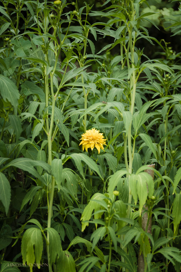 fine art botanical photographer west sussex