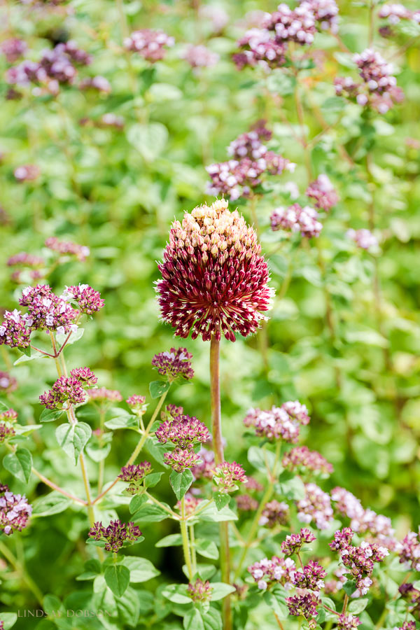 fine art botanical photographer surrey