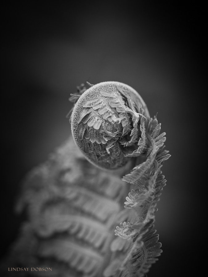 SS Flower Portraits Micro Four Thirds Lenses-2045.jpg