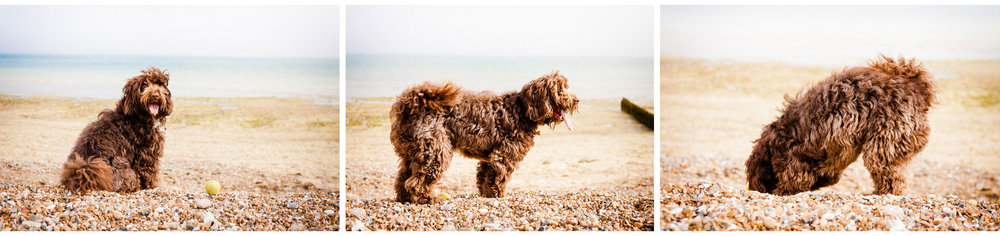 family and pet photoshoot at the beach in west sussex