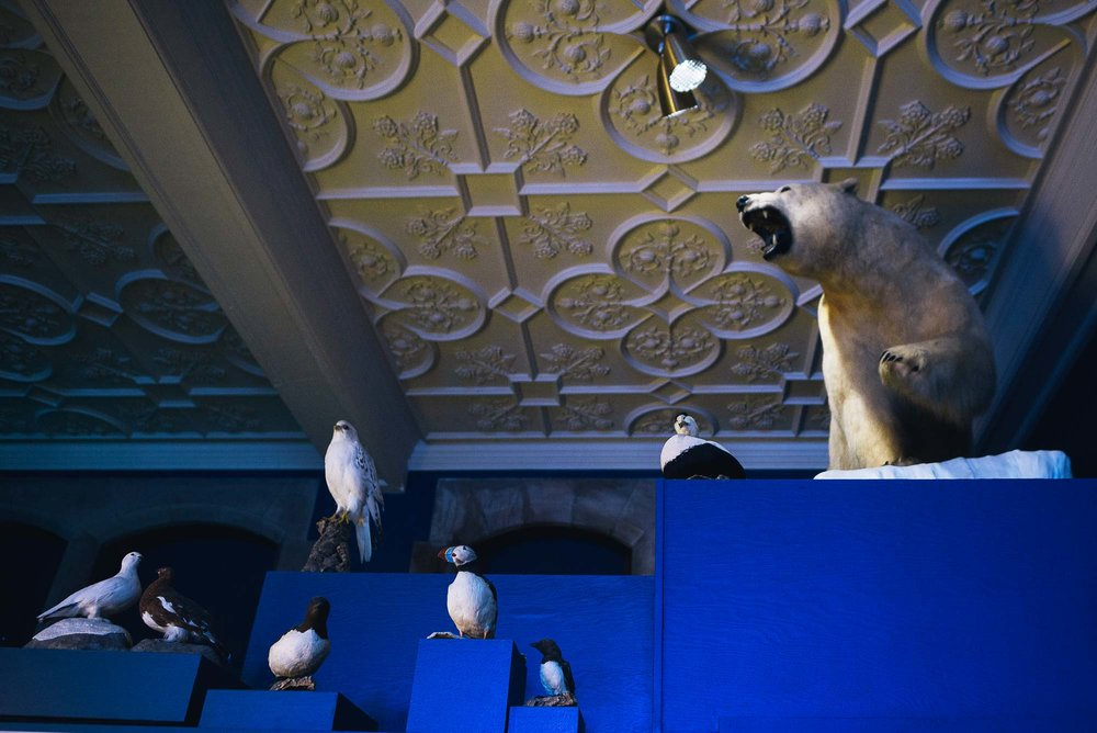 Bowdoin's Peary-MacMillan Arctic Museum is dedicated to all things Arctic.