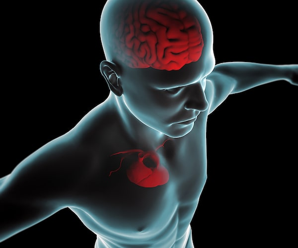 3D illustration of human body, brain and heart