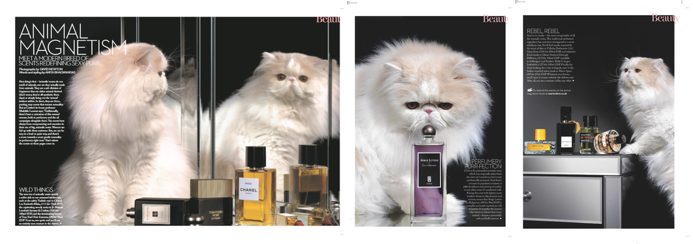 MARIE CLAIRE - ANIMAL MAGNETISM (PHOTO: DAVID NEWTON)