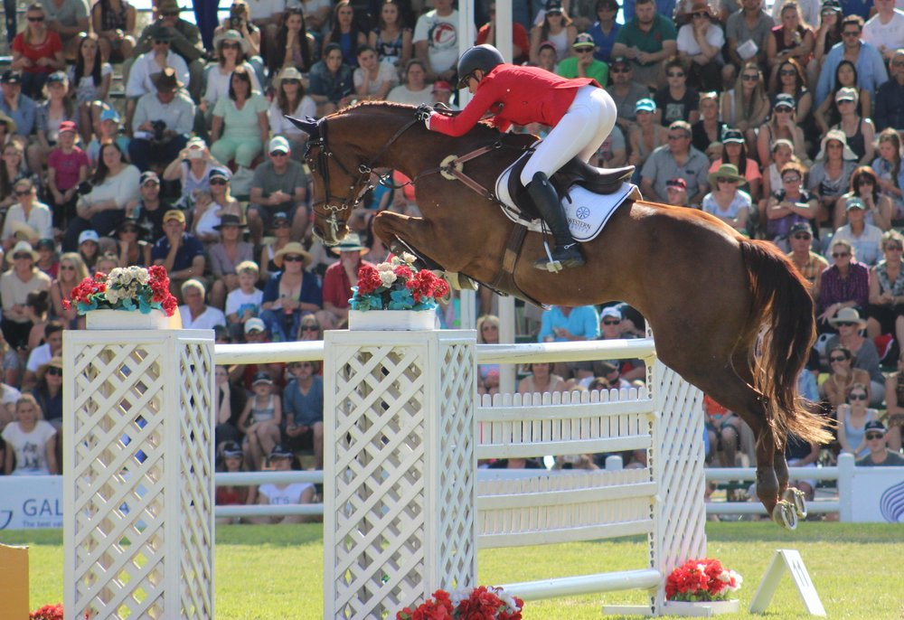 ALESSIO - COMPETING SUCCESSFULLY AT 1.50M LEVEL IN SOUTH AFRICA