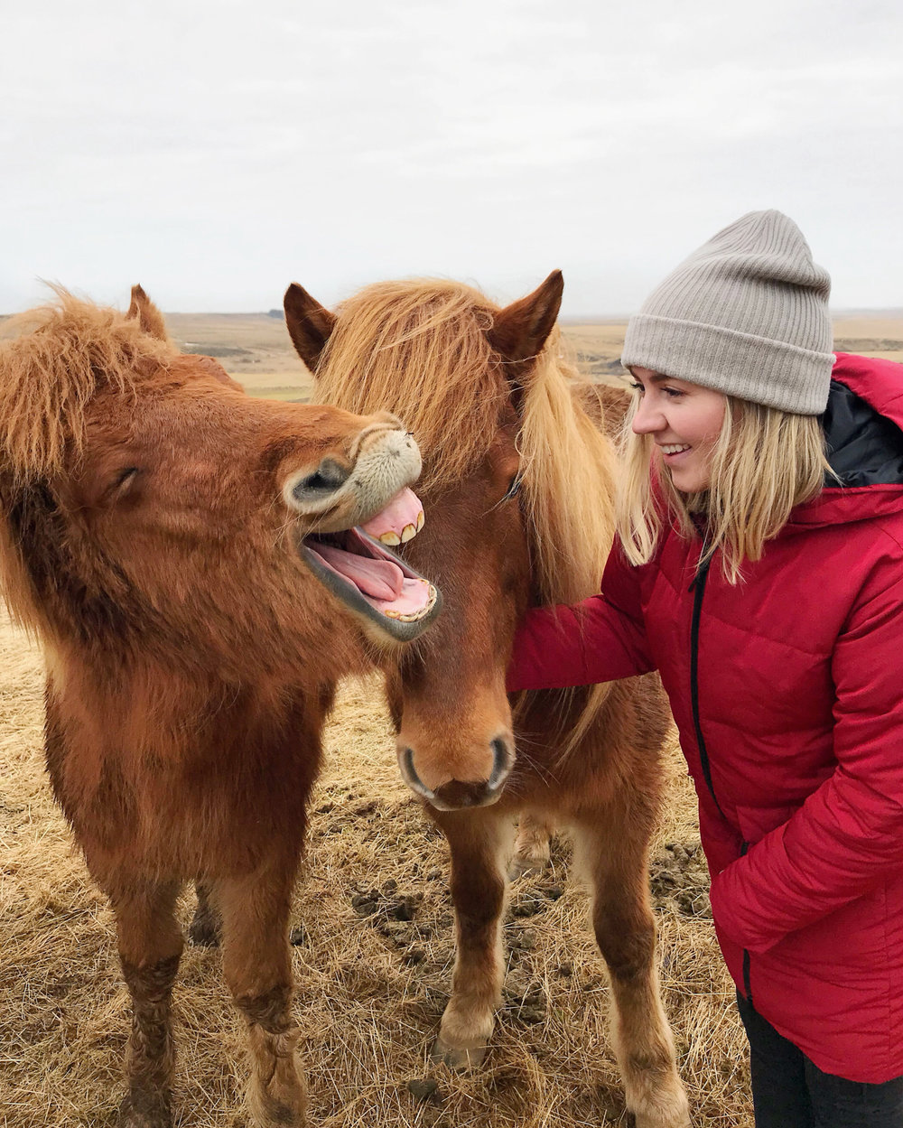 Making friends with Icelandic horses!