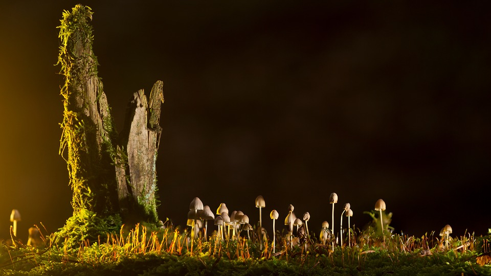 mushrooms-2212899_960_720.jpg