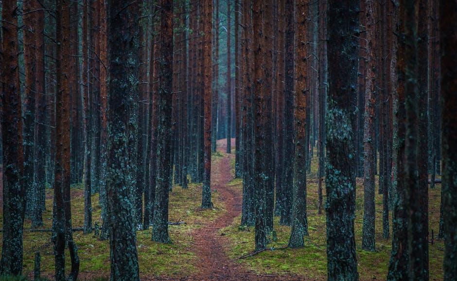 Un arbre emmagasine en moyenne 20 tonnes de  CO2  au cours de sa vie. Une forêt émet 10 000 kilos d' oxygène  par kilomètre carré.