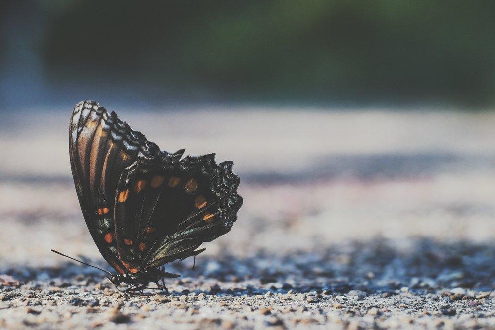 Les papillons permettent aux plantes et fleurs de vivre grâce à leur pollinisation.