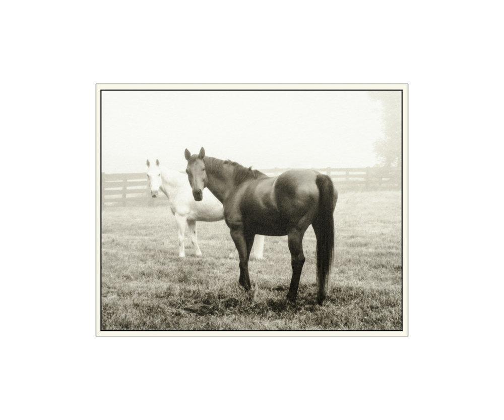 Foggy Morning in the Pasture - Ellen Martin