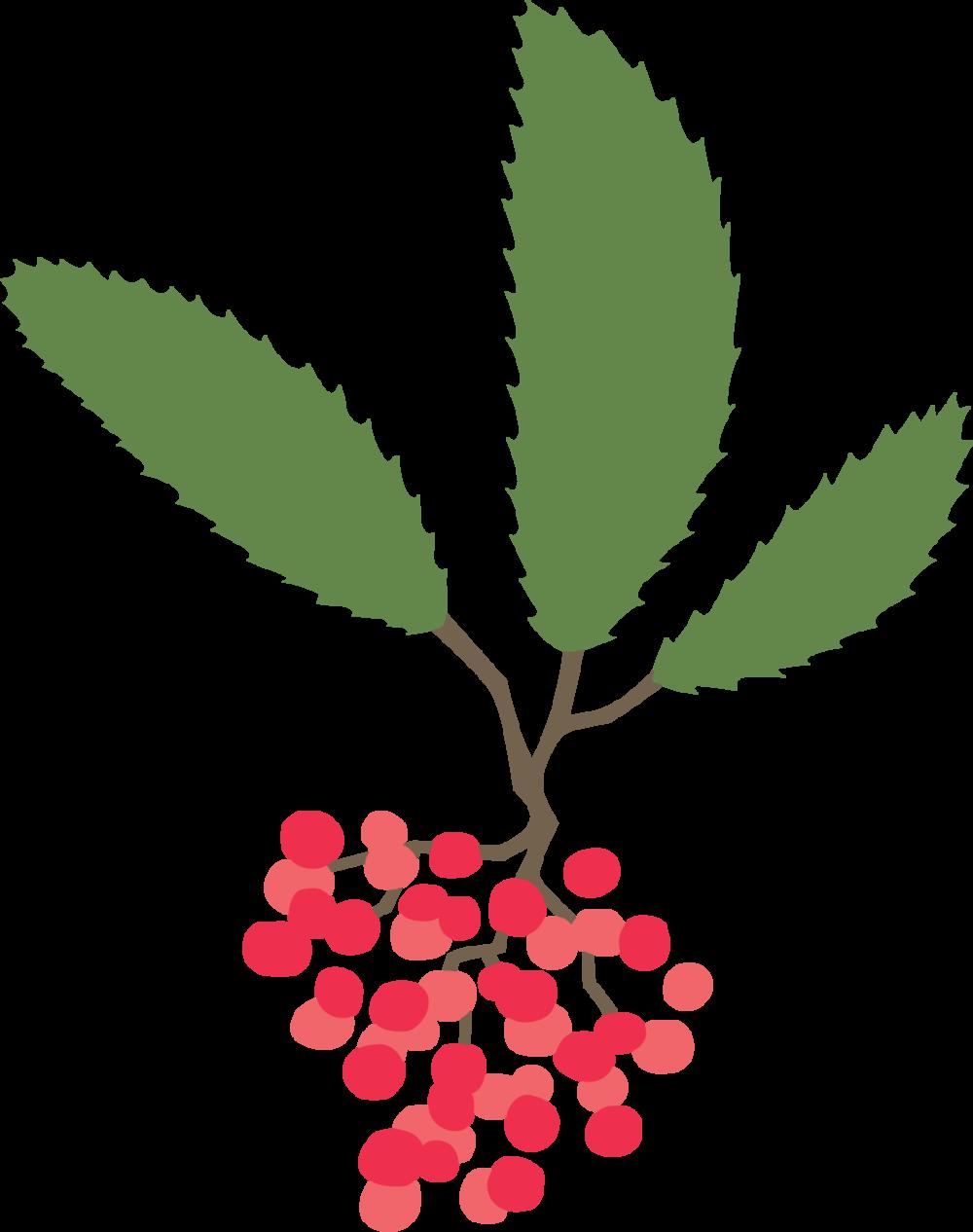 toyon_plant.png