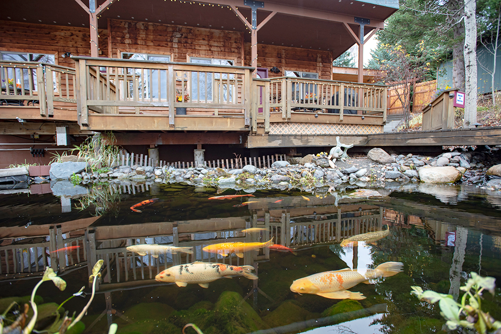 The koi pond and waterfall make for a soothing atmosphere.
