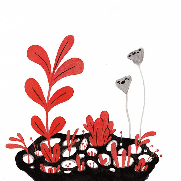 lotus-pod.jpg