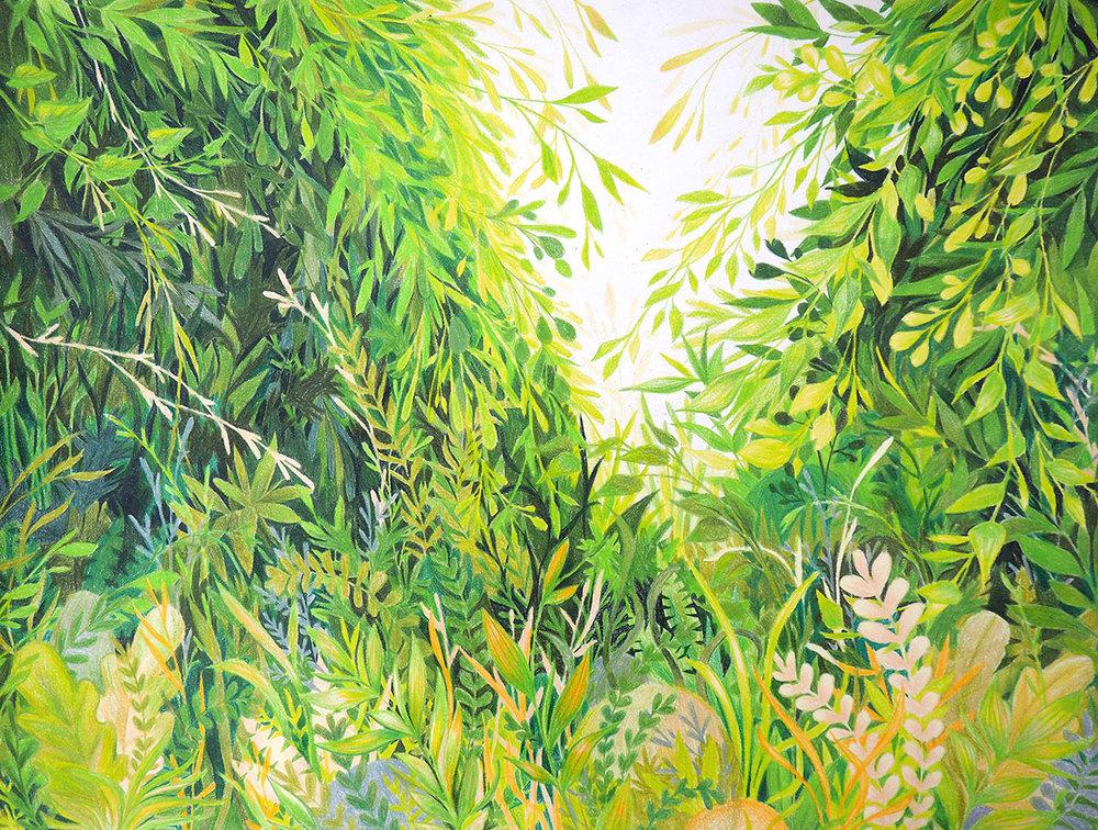 Liz Nugent - Plants 3.jpg
