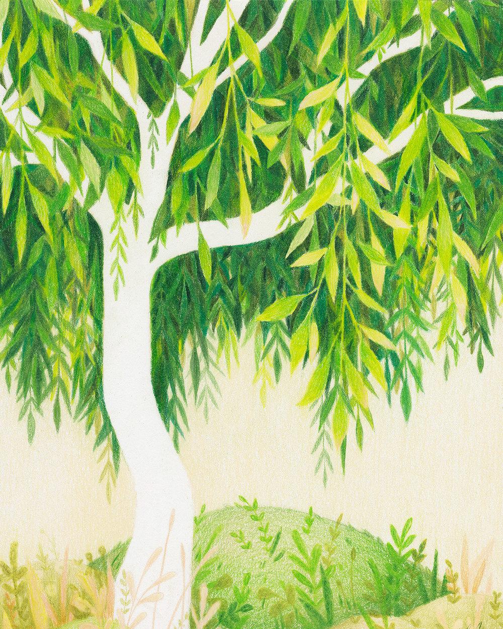 liznugent-greenwillow1.jpg