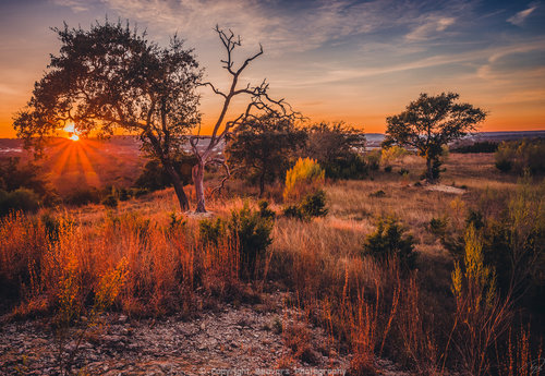 Half Alive And Half Dead Oak Tree At Sunset Beavers Photography