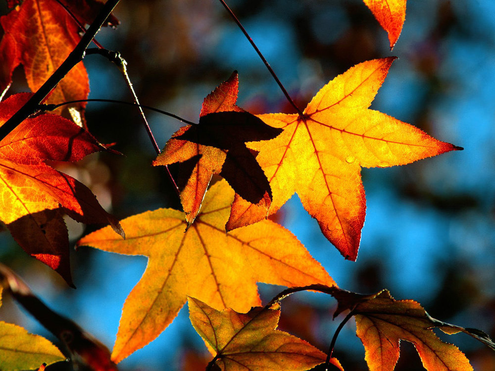 autumn-leaves-light-wallpaper.jpg