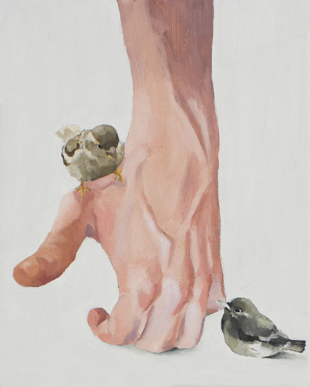 Dos gorriones con mano. 2013