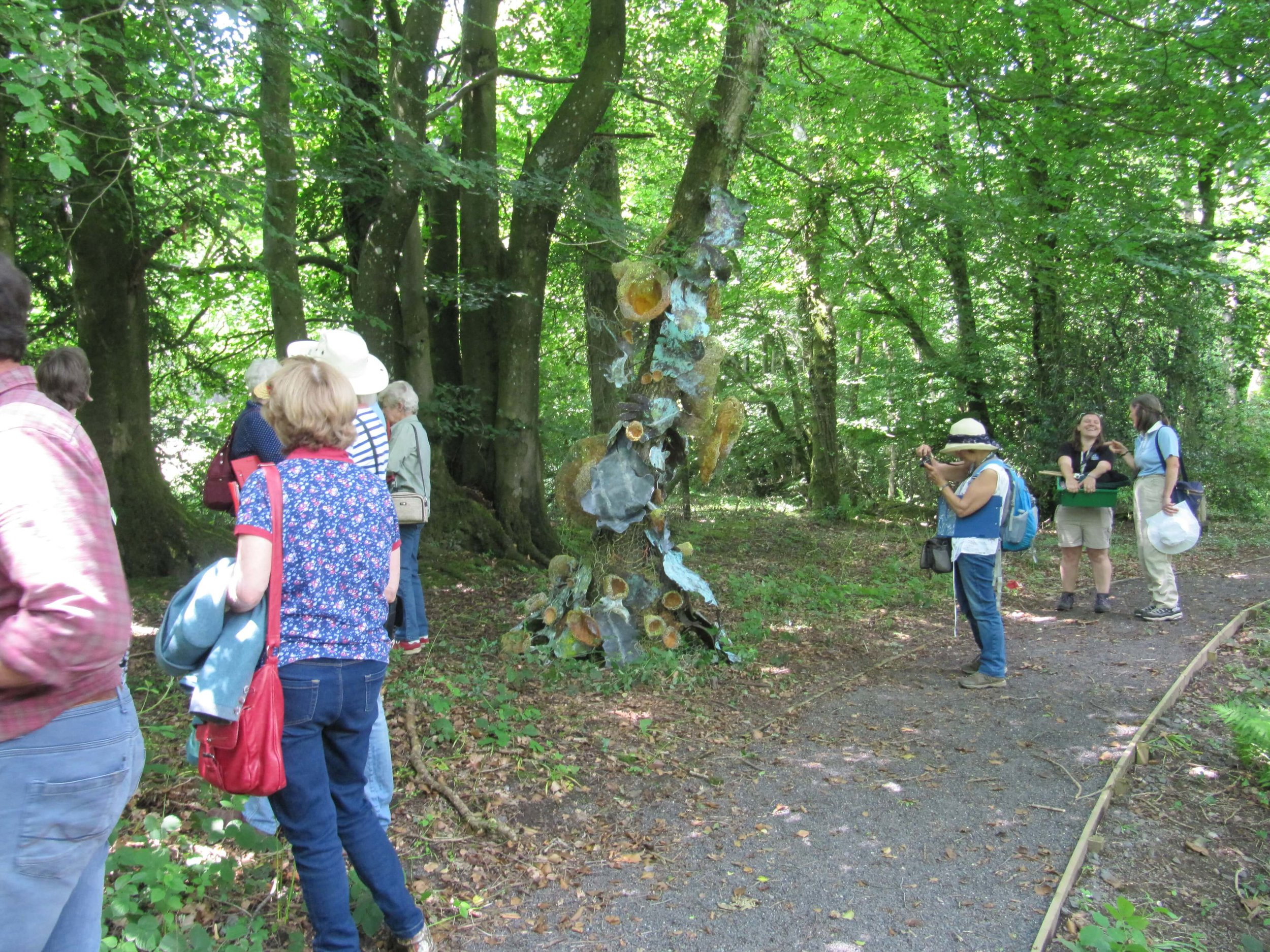 Guided Walk in collaboration with Somerset Wildlife Trust