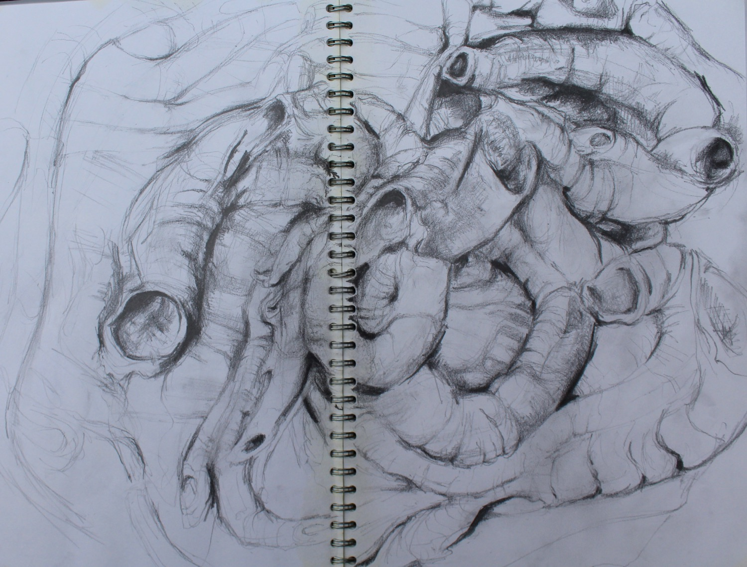 Worm casts, graphite drawing