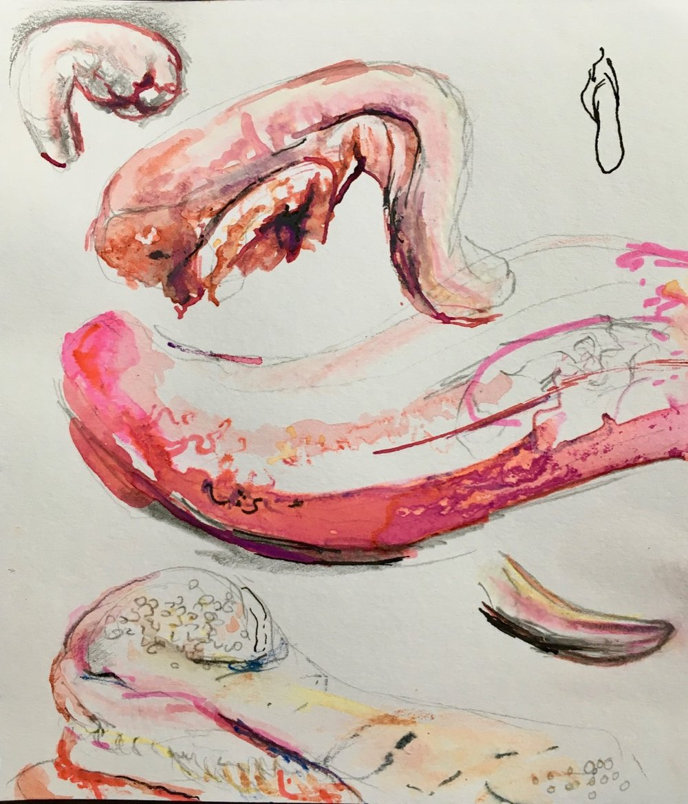 Fiona Campbell, tongue sketches.jpg