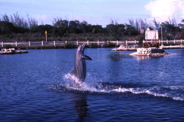 Dolphin 2.jpg