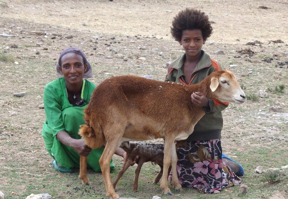 Woman_and_Child_with_Sheep_-_Near_Teka_Tesfai_-_Ethiopia_(8713296049).jpg