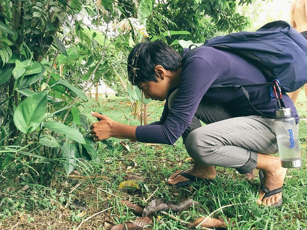 permaculture-herbalism-7.jpg