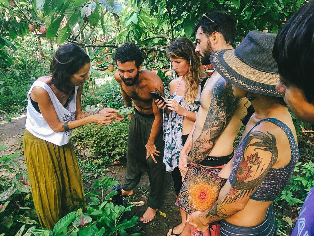 permaculture-herbalism-8.jpg