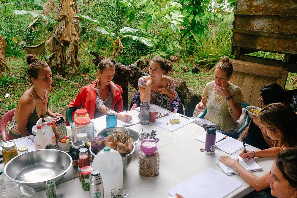 permaculture-herbalism-13.jpg