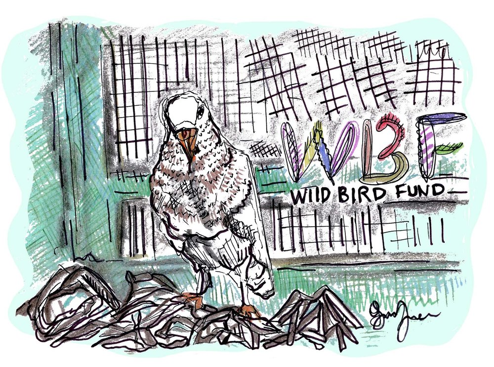 wildbirdfund_version2.jpg