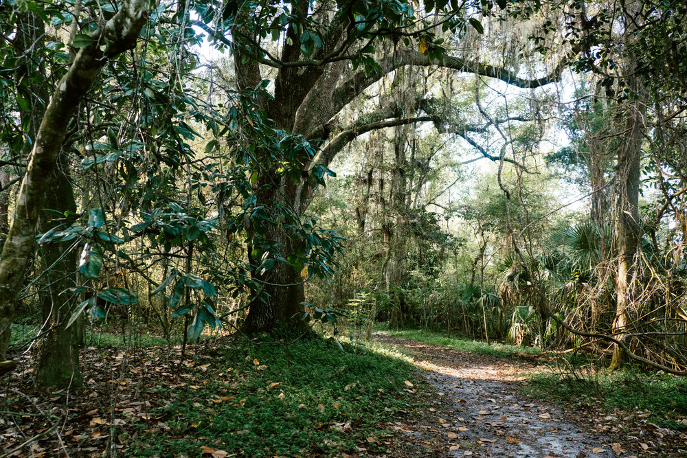 Bivens arm nature park -