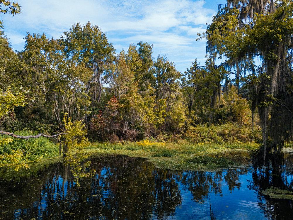 colclough Pond nature park -