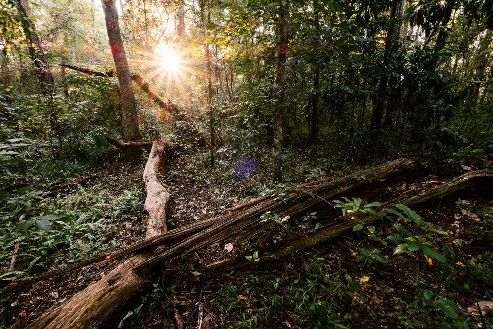 cofrin nature park -