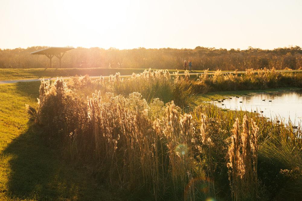 sweetwater wetlands park -