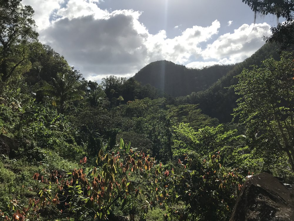 Coffee Plantation Views - RachelTravels.com